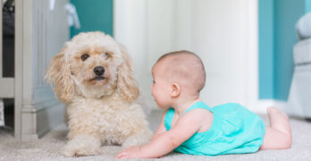 Baby Looking At The Dog | New Baby & Your Dog: What To Expect When These Two Meet