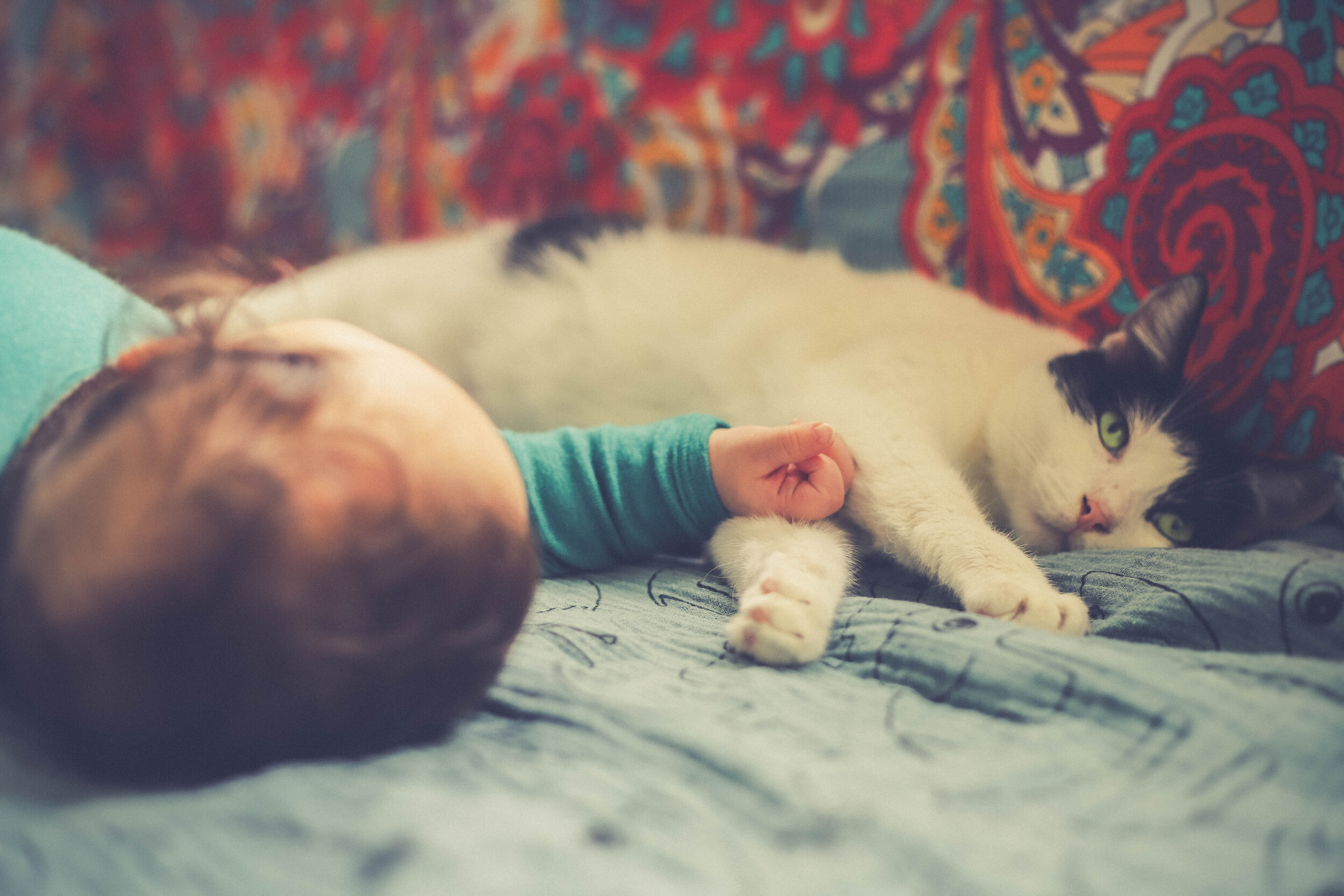 Baby and Cat | 8 Important Ways Of Preparing Pets For a Baby's Arrival