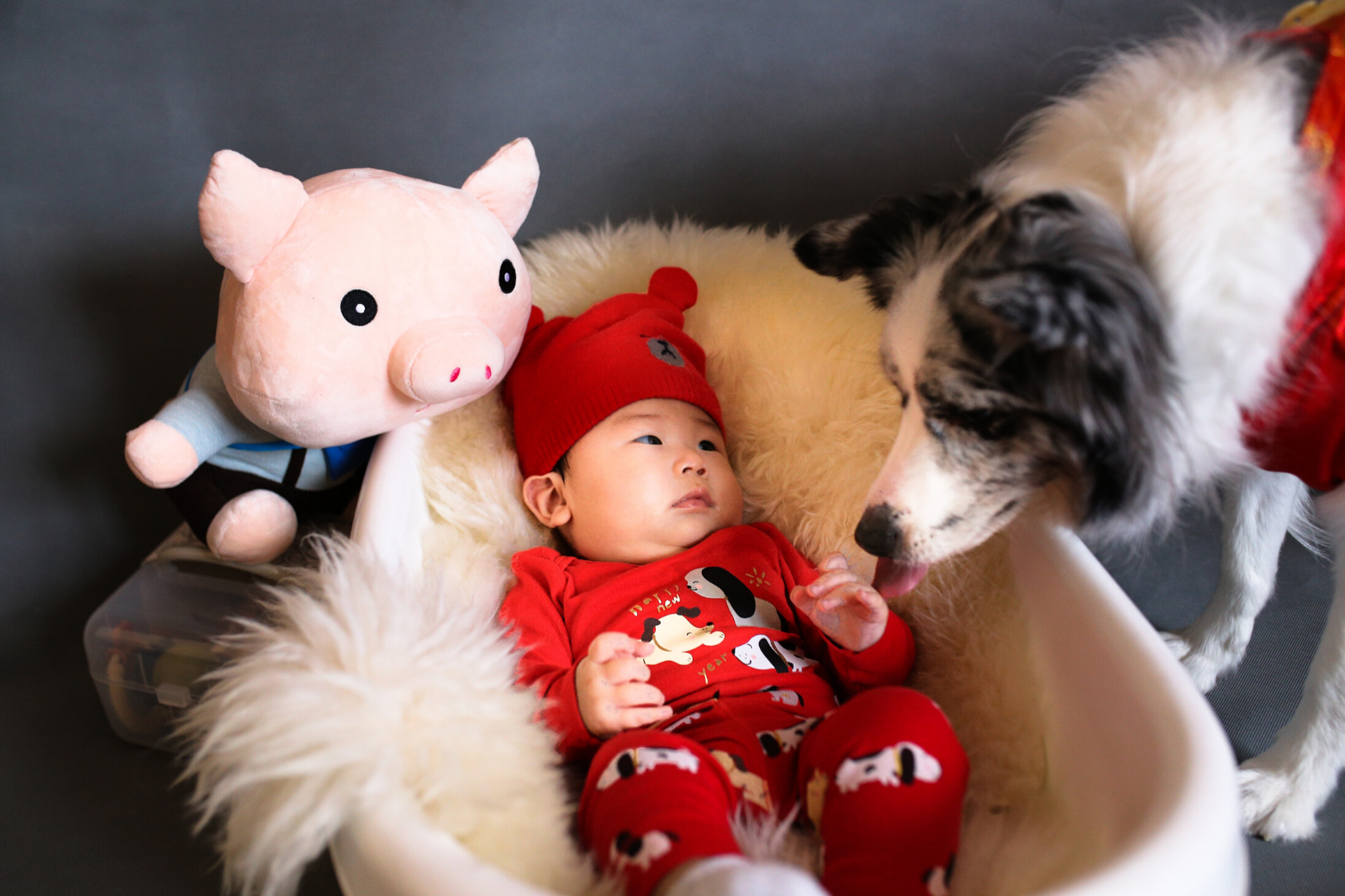 Baby and Dogs | 8 Important Ways Of Preparing Pets For a Baby's Arrival