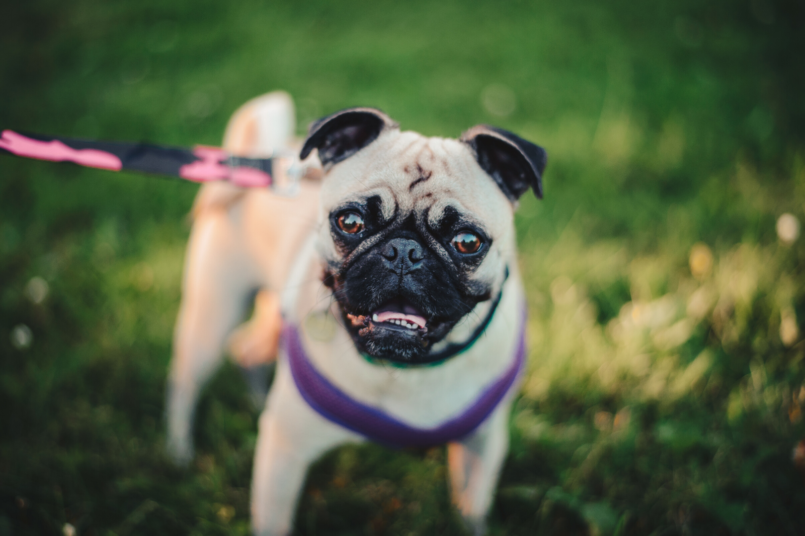 Dog   New Baby & Your Dog: What To Expect When These Two Meet