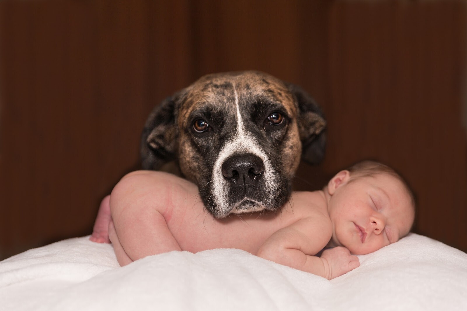 Baby and Dog   New Baby & Your Dog: What To Expect When These Two Meet